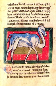 Ass /asinus/, Horse /equus/