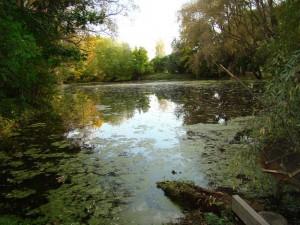 old pond.