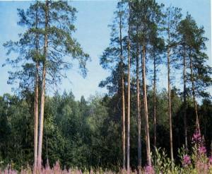 in Karelia.