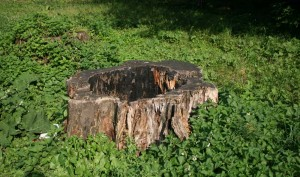 The stump