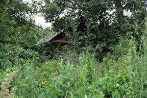 Overgrown house.