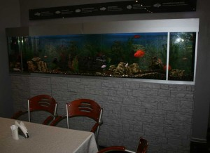 A large aquarium is very animates any interior