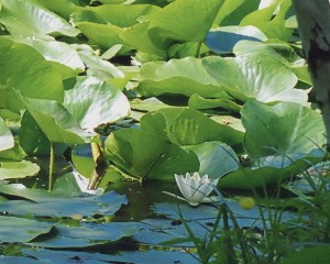 Der See Ostrownoje. Das Staatliche Museum-Naturschutzgebiet namens M. A. Scholochow
