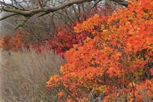 Herbst-Busch