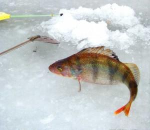 Winter fishing in Russia.