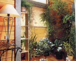 Area with potted plants