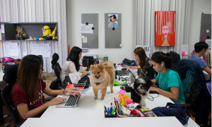 Thai staffs work with their dogs at the office of Adyim, a digital marketing solution company